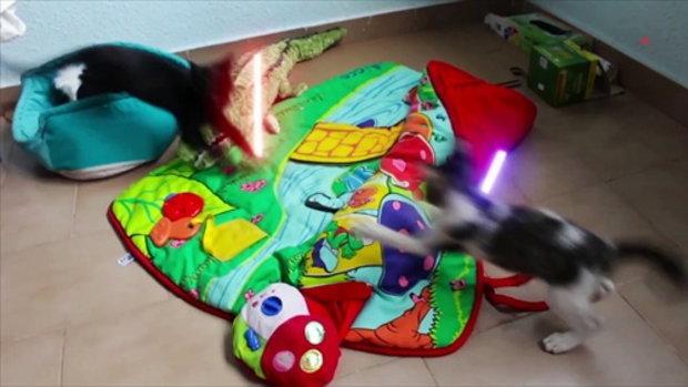 รวมภาพสุดฮาเมื่อสัตว์เลี้ยงกับของเล่น มีของเล่นสตาวอร์ด้วย