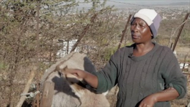 เผยแก๊งค์ล่าถลกหนัง 'ลา' ส่งออกจีนเหิมหนักในแอฟริกา หวั่นสูญพันธุ์ใน 2 ปี