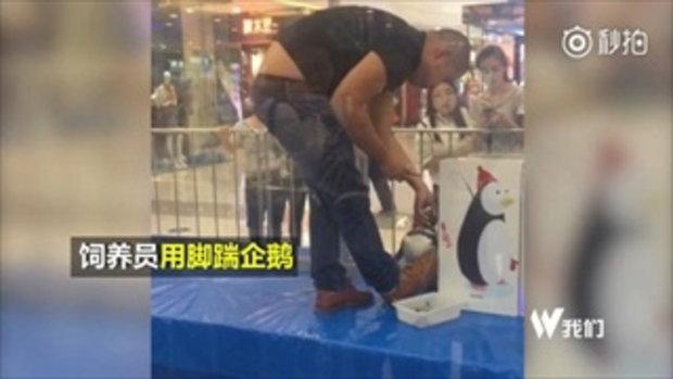 ชาวเน็ตจีนเดือด คนเลี้ยงเตะเพนกวินขณะให้อาหารโชว์ลูกค้าในห้างฯ