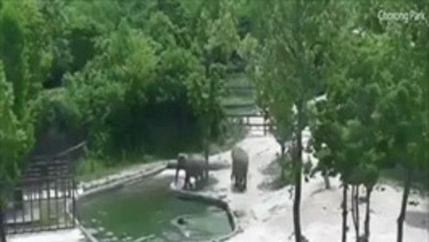 สุดประทับใจ! ในความรัก ความห่วงใยของช้างที่มีต่อลูก เมื่อลูกตกสระน้ำ