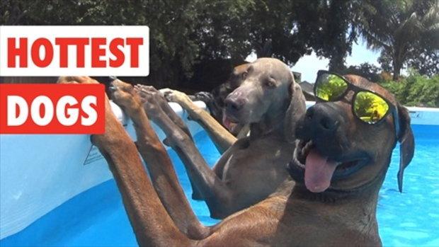 รวมความน่ารักและความฉลาดของน้องหมาในวันที่แสนจะร้อน
