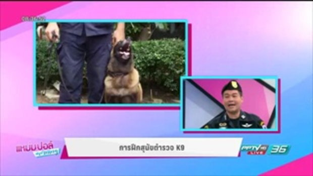 ภารกิจช่วยชาติ ของสุนัขตำรวจ K9 - แหม่ม ปอล์ มอร์นิ่ง 22 มิ.ย. 60 3/4
