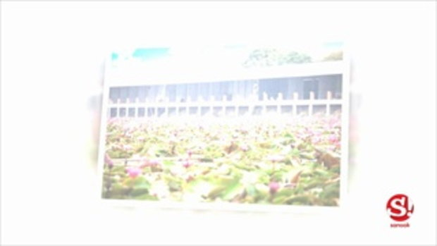 เช็คอินที่เที่ยวใหม่สุดชิค ตลาดน้ำทุ่งบัวแดง นครปฐม