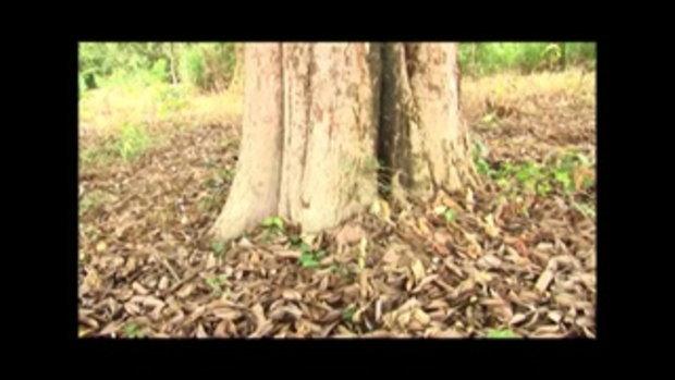 กระบี่มือหนึ่ง : สุดยอดการล้อมต้นไม้ (23 พ.ค.54)