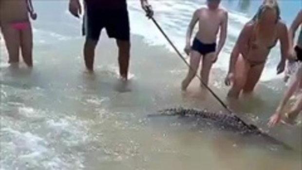 หวาดเสียว! หนุ่มจูงจระเข้ มาเล่นน้ำทะเล เด็กน้อยเอามือจับเล่นไม่กลัวตาย