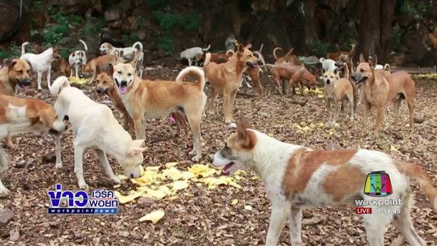 สุดทึ่งสุนัขกว่า 200 ตัวกินข้าวพร้อมกัน l ข่าวเวิร์คพอยท์ l 11 ก.ค.60