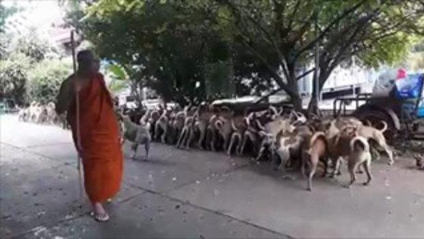 ทึ่ง!! หมาวัดกว่า 200 ตัว เชื่อฟังคำสั่ง