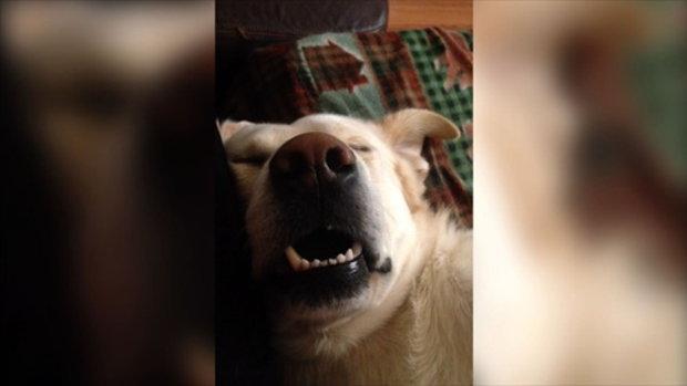 ลูกสุนัขก็นอนกรนได้นะ