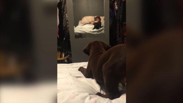 เมื่อเจ้าสุนัขตัวน้อยเพิ่งเคยเห็นกระจกเป็นครั้งแรก