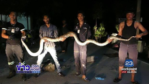 งูเหลือมขนาดใหญ่กินแมวไป 3 ตัว ซุกท่อปูน l ข่าวเวิร์คพอยท์ l 13 ก.ค.60