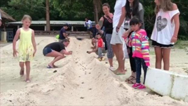 แตกรังแรกของปี !! ลูกเต่ากระสัตว์ทะเลหายาก 99 ตัวที่เกาะทะลุ บ่งชี้หาดทะเลสมบูรณ์
