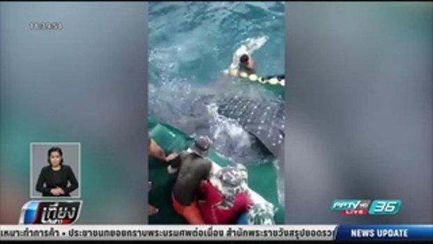 โซเชียลแห่ชื่นชมชาวประมงปล่อยฉลามวาฬ