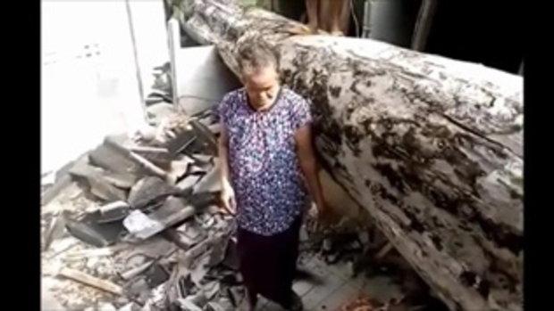 เชื่อในปาฏิหาริย์ ยายวัย 74 ปี เล่านาทีระทึก กำลังนั่งดูทีวี ต้นไม้ใหญ่ล้มทับบ้าน