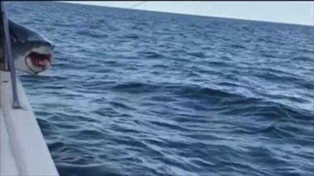 ผวากันทั้งเรือ !! เมื่อมีฉลาม กระโดดโผล่ขึ้นบนเรือ