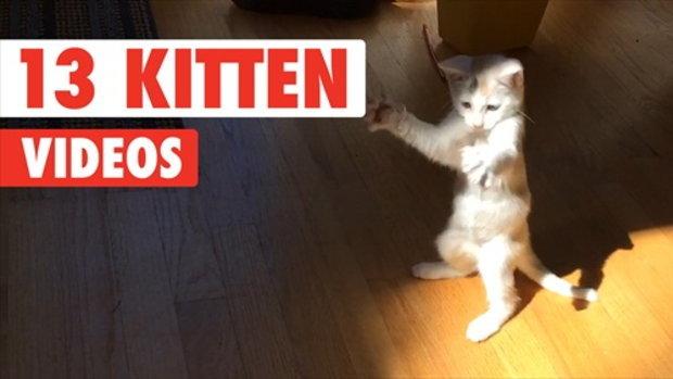 รวมความน่ารักของลูกแมวน้อย