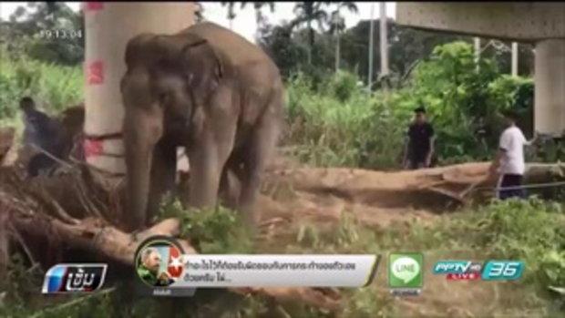ช้างสีดอมงคล ตกมันอาละวาดรอบ 2 จนท.ควบคุมได้ทัน - เข้มข่าวค่ำ