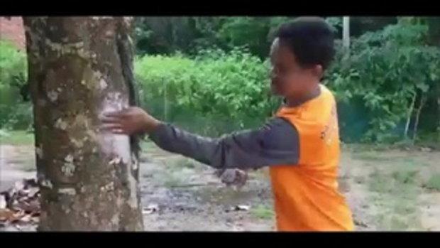 ฮือฮา !! ต้นมะเหมี่ยวให้เลขเด็ด ชาวบ้านแห่จุดธุปทาแป้งเห็นเลขชัดเจน