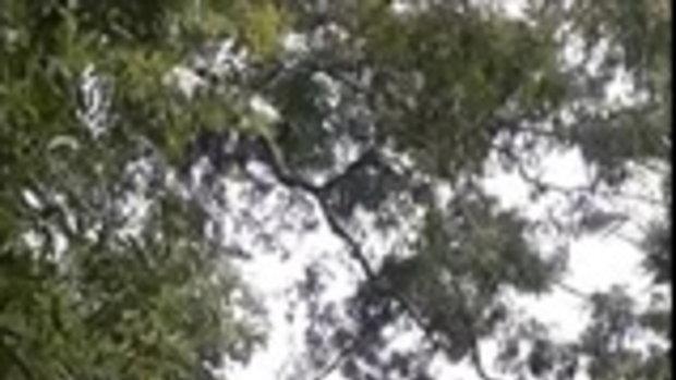เด็กๆเขาเล่นกัน! โน้มต้นไม้ดีดเพื่อนขึ้นฟ้า ตอนขึ้นเหมือนพญา ตอนลงอย่าบอกนะว่าไม่เป็นไร