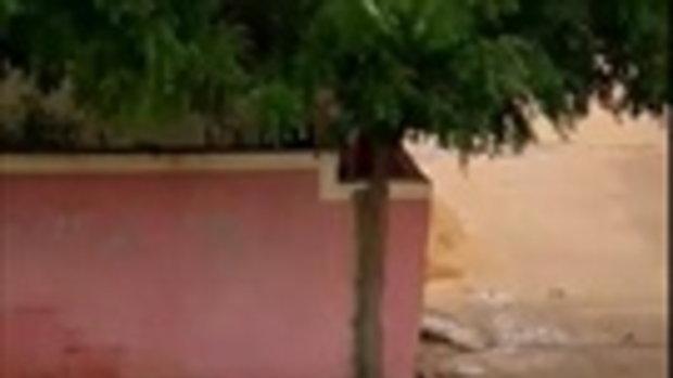 อย่างโหด! หมูคลั่งอาละวาดรุมกัดหญิงชาวบ้าน กระชากหัวลากไปกับพื้น