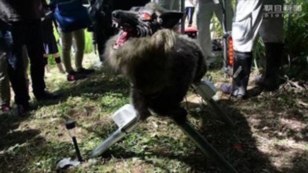 เกษตรกรญี่ปุ่นหัวใส สร้างหุ่นยนต์หมาป่าสุดหลอน มาแทนที่หุ่นไล่กา