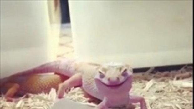 โถ่.. น่ารักน่าเอ็นดู เห็นหรือยังมันยิ้มหวาน ๆ ให้ด้วยนะ