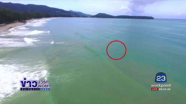 ผวจ. ภูเก็ตสั่งเฝ้าระวังจระเข้ว่ายกลางทะเล 24 ชม  l ข่าวเวิร์คพอยท์ l 31 ส.ค. 60
