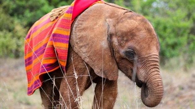 ลูกช้างกำพร้า รอดชีวิตจากป่า