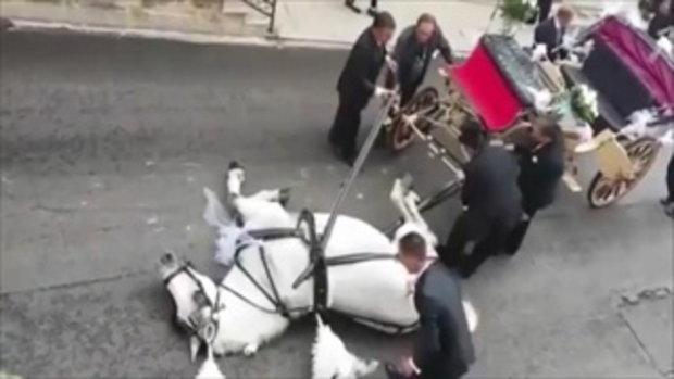 ม้าขาวลากคู่บ่าวสาวและของตกแต่งกว่า 400 กก.เข้าโบสถ์ ถึงจุดหมาย…เป็นลม