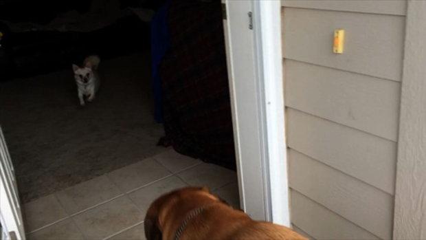 เมื่อสุนัขใหญ่มาเจอสุนัขเล็ก