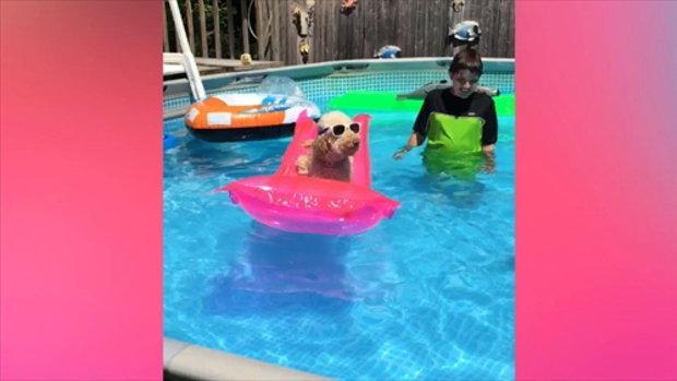 ความน่ารักของสุนัขว่ายน้ำ