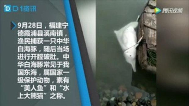 สลด! ชายจีนผ่าท้องแล่เนื้อโลมาเผือก จนท.เร่งตรวจสอบ