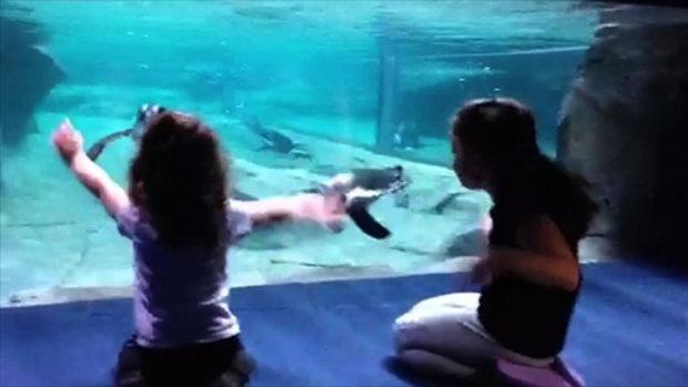เพนกวิน เป็นสัตว์น่ารัก