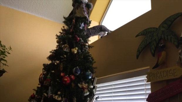 คำเตือน อย่าไวใจแมวช่วงคริสมาส!