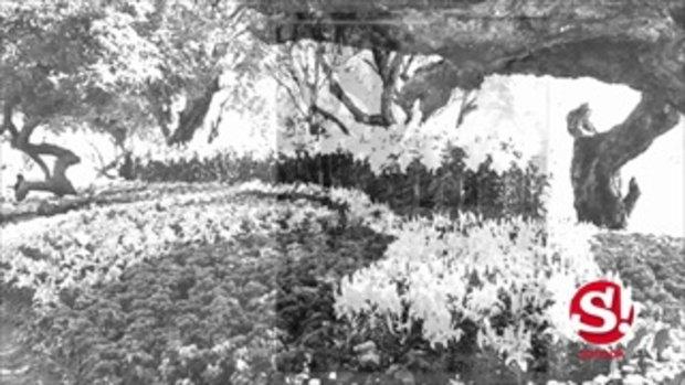 ท่องเที่ยวสไตล์พิศาล มหกรรมไม้ดอกอาเซียน ประชันโฉมเชียงรายดอกไม้งามครั้งที่ 13