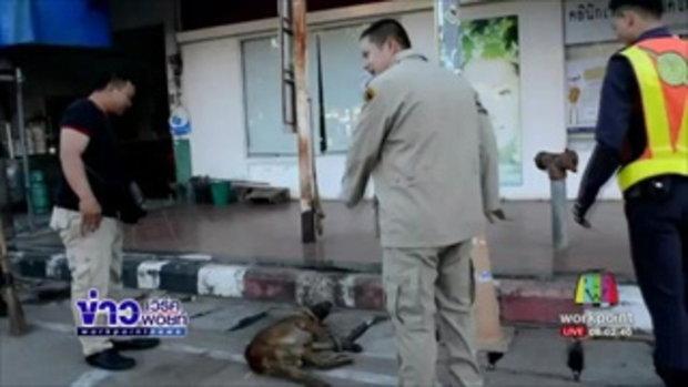 จนท รุดช่วยสุนัขหิวโซเดินโซเซไม่มีเจ้าของนอนกลาง 4 แยก l ข่าวเวิร์คพอยท์ (เช้า)l 23 ม.ค.60