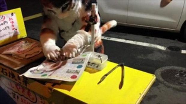 แมวยักษ์ขายมันเผา ที่ญี่ปุ่น