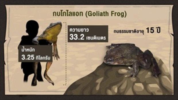 กบนอกกะลา : สัตว์น้อยหรรษา ซูเปอร์สตาร์หน้าฝน (1) ช่วงที่ 2/4 (9 ก.พ.60)