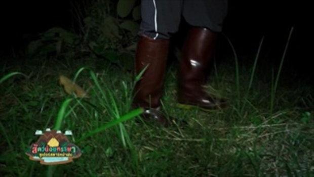 กบนอกกะลา : สัตว์น้อยหรรษา ซูเปอร์สตาร์หน้าฝน (1) ช่วงที่ 3/4 (9 ก.พ.60)