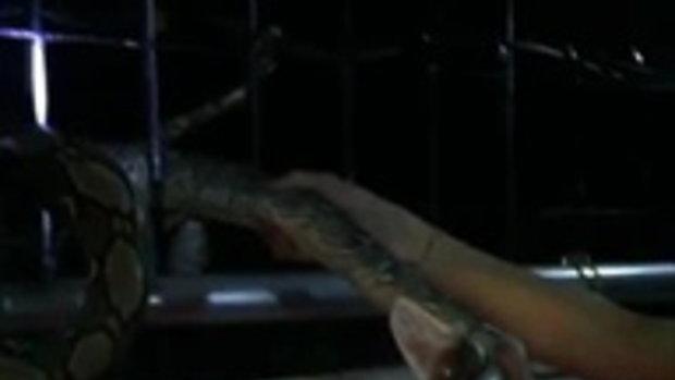 แทบกรี๊ด!! ท็อป ดารณีนุช เจองูยักษ์เลื้อยเข้าบ้าน
