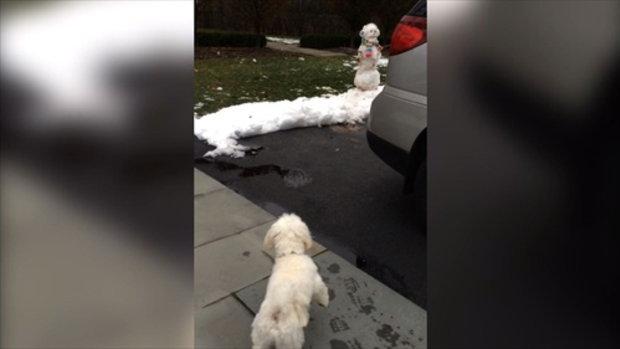 สัตว์โลกน่ารัก ตอน หมา VS สโนว์แมน (Snowman)