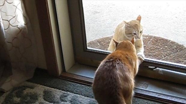 สัตว์โลกน่ารัก ตอน แมวสายโหด