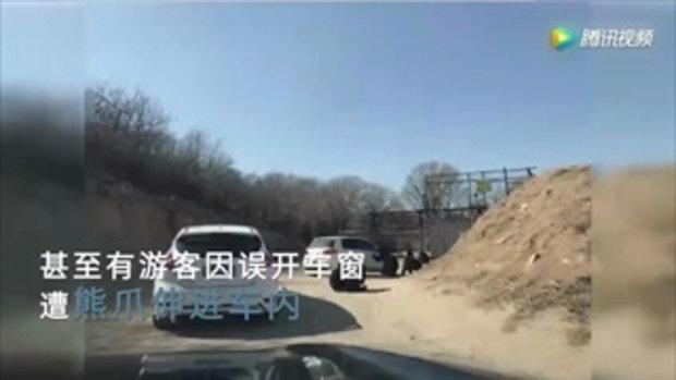 ระทึก! หมีในสวนสัตว์จีนยืนเกาะหน้าต่างรถ เด็กกลัวกดเปิดหน้าต่าง