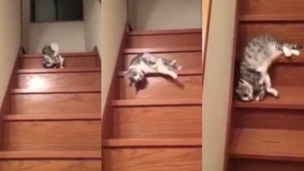 แมวสไลเดอร์ !! ถ้าจะขี้เกียจนัก นอนอยู่ข้างบนเถอะนะ เหมียว