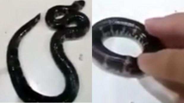 งูกินหางของตัวเอง