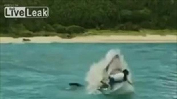 นาที ฉลามกระโดดกัดนักเล่นเซิร์ฟ กลางลำตัว เรื่องจริงป่ะ ลองไปชม !
