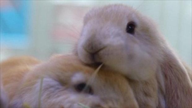 กบนอกกะลา : สองกบ ตะลุยแดนกระต่าย ช่วงที่ 1/4 (9 มี.ค.60)