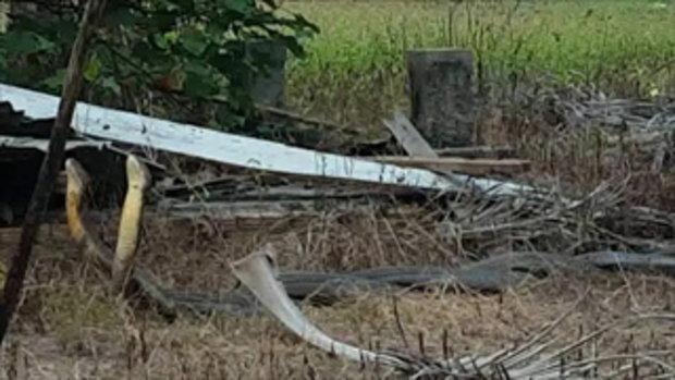 ชาวบ้านตกตะลึง งูจงอางยักษ์ เลื้อยพลอดรักหวานใส่กัน