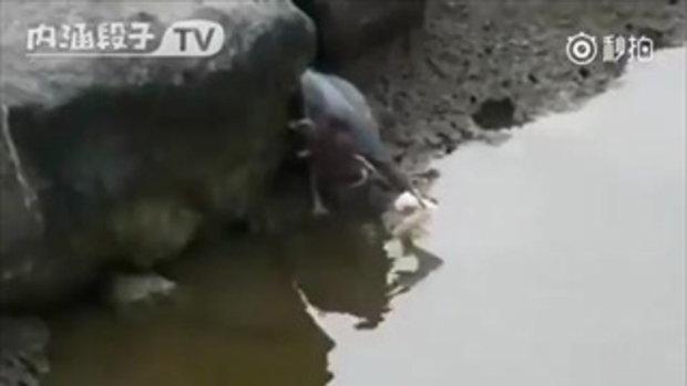 จีเนียส !! นกแสนรู้ ใช้ขนมปังล่อปลา ก่อนจับกิน