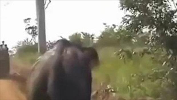 ระทึก !! ช้างตกมัน วิ่งชนรถตกข้างทาง กับอาวุธไล่ช้าง ที่ไม่น่าเชื่อ