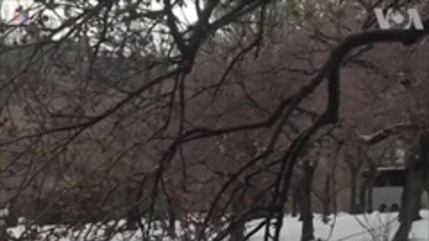 พิษพายุหิมะทำให้
